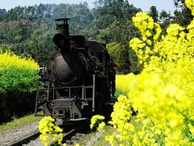 开往春天的小火车,成都人只认这辆